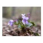 Woodland Violet Postcard