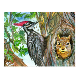 Woodpecker And Squirrel Postcard