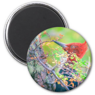 Woodpecker at Forest Pecking 2 Inch Round Magnet