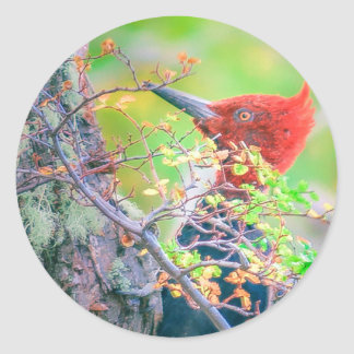 Woodpecker at Forest Pecking Classic Round Sticker