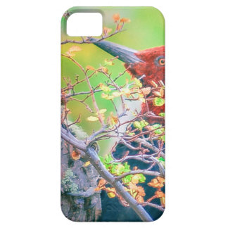 Woodpecker at Forest Pecking iPhone 5 Cases
