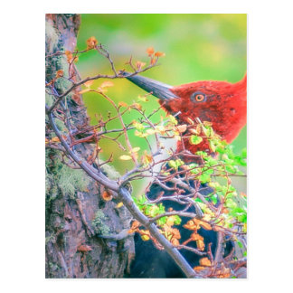 Woodpecker at Forest Pecking Postcard