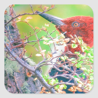 Woodpecker at Forest Pecking Square Sticker