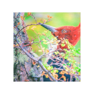 Woodpecker at Forest Pecking Tree Canvas Print