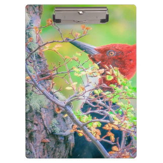 Woodpecker at Forest Pecking Tree Clipboard