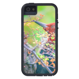 Woodpecker at Forest Pecking Tree iPhone 5 Cover