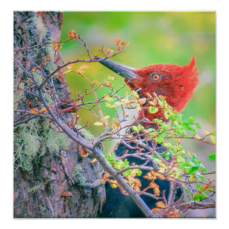 Woodpecker at Forest Pecking Tree Poster