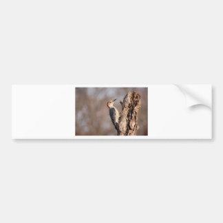 Woodpecker Bumper Sticker