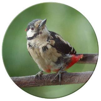 Woodpecker ~ Bunspecht ~ pic épeiche ~ by GLINEUR Plate