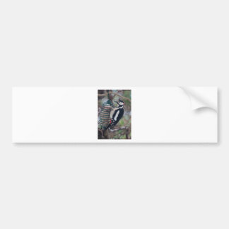 Woodpecker eating bumper sticker