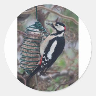 Woodpecker eating round sticker