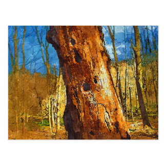 Woodpecker Habitat Postcard