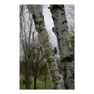 Woodpecker in spring poster