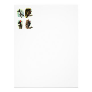 Woodpecker Letterhead