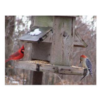 Woodpecker&Male Cardinal Postcard