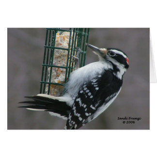 Woodpecker Note Card