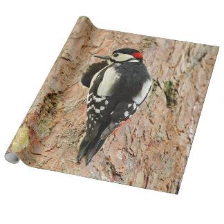 woodpecker on his tree