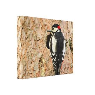woodpecker on his tree canvas print