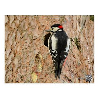 woodpecker on his tree postcard