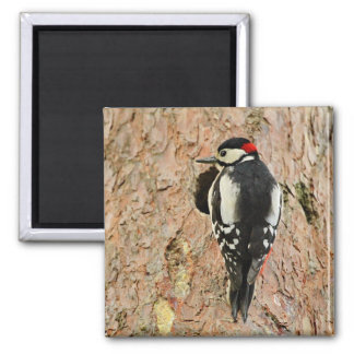 woodpecker on his tree square magnet