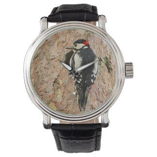 woodpecker on his tree watch