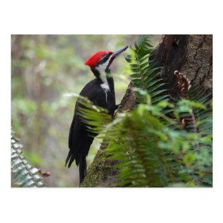 Woodpecker on tree postcard