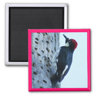 Woodpecker Square Magnet