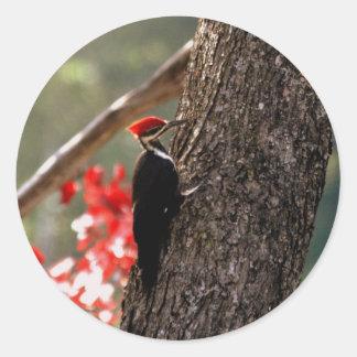 Woodpecker Stickers