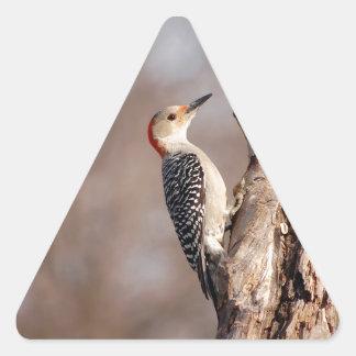 Woodpecker Triangle Sticker