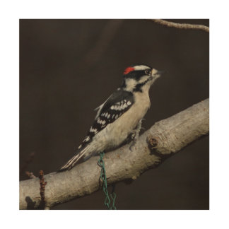 Woodpecker, Wood Photo Print. Wood Wall Art