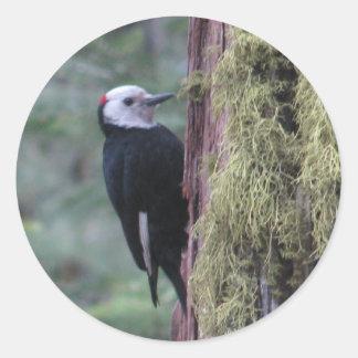 Woodpecker- Yosemite Round Sticker