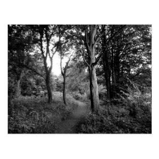 Woods Bute Park, Cardiff Postcard