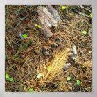 Woods Floor-Pinecones,etc..Poster Poster