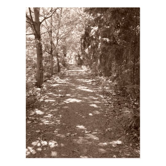 Woods Path--Sepia Postcard