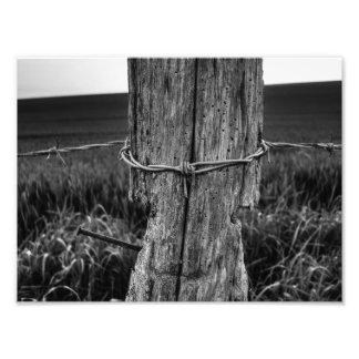 Woodworm Photo Print