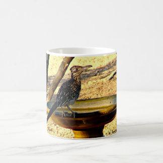 Woody on Bird Bath Coffee Cup/Mug Coffee Mug
