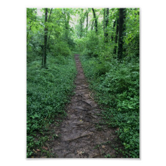 Woody Path Poster