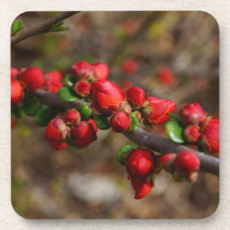 Woody Red Blooms Coaster