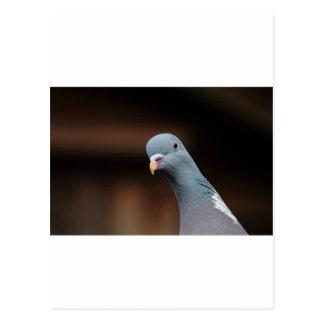 Woody wood pigeon postcard