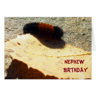 Woolly Bear Caterpillar Card