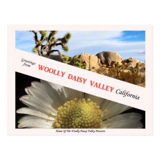 Woolly Daisy Valley - Postcard