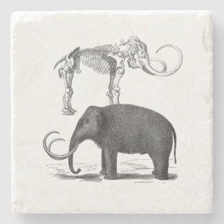 Woolly Mammoth Prehistoric Elephant and Skeleton Stone Coaster