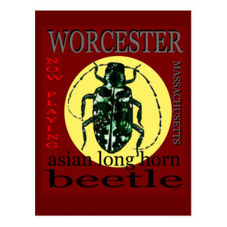 Worcester Long Horned beetle Postcard
