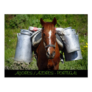 Work horse postcard