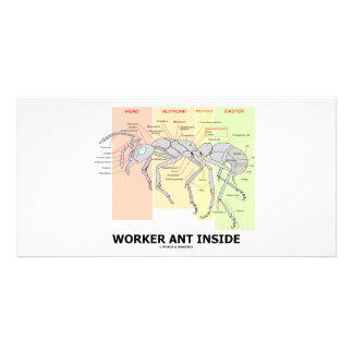 Worker Ant Inside (Ant Anatomy) Personalized Photo Card