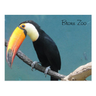 World of Birds Postcard
