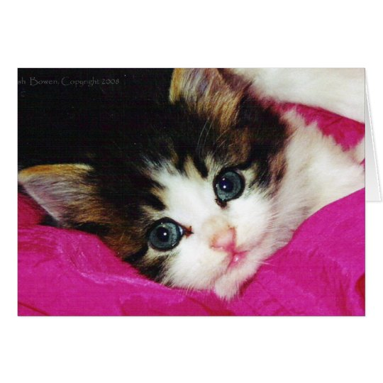 Worlds Cutest Kitten