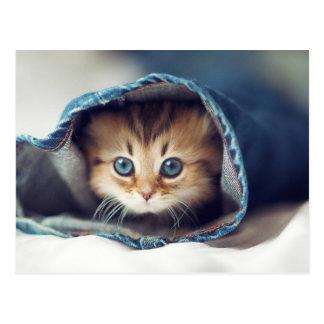 World's Cutest Kitten in Jeans Postcard