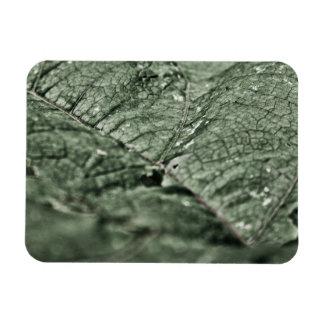 Worn green leaf 3 x4 rectangular magnets