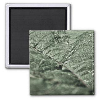 Worn green leaf magnets